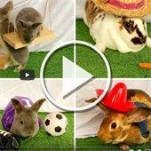 Play bunny video