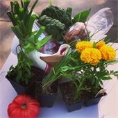 Produce and flowers