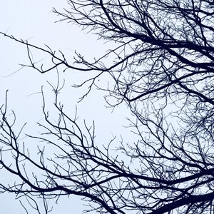 Tree-branches-sky_300